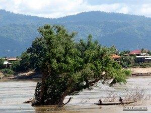 Vat Phou, Mekong