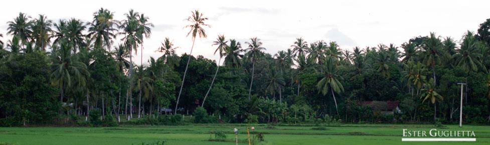 Llegada a Sri Lanka