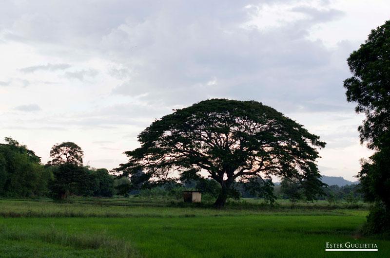 Sri Lanka, Viaje