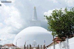 Buda, Aukana