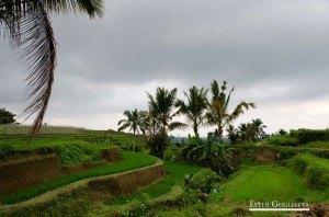 Asia, Bali, Munduk, Jatiluwih, Lago Bratan, Lago Tamblingan, Lago Buyan,