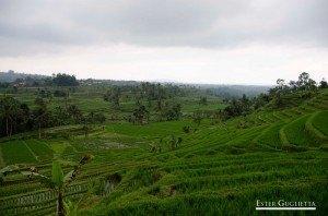 Jatiluwih, Asia, Bali. Lago Bratan, Lago Buyan, Lago Tamblingan, Munduk, Tabanan
