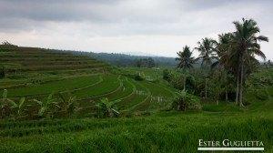 Bali, Asia,