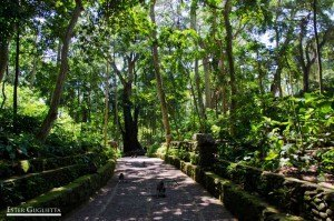 Ubud, Monkey Forest