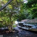 1133.-Acacias-y-densos-manglares