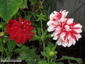 1802.-Flor