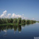 519-Plantaciones-en-el-agua