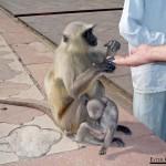 0507.-Tambien-hay-monos