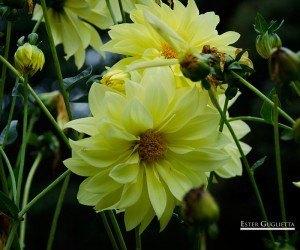 Flor en el hotel Olathang