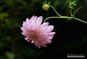 Flor en el camino de ascenso