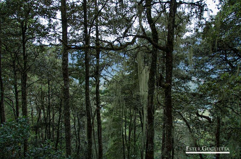 Bosque subiendo al templo