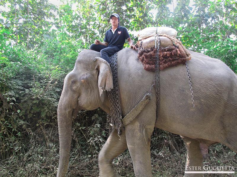País de un millón de elefantes