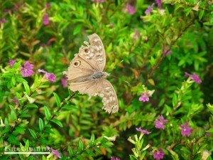 Mariposa, estaba viva