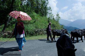 Mujeres cuidando del rebaño